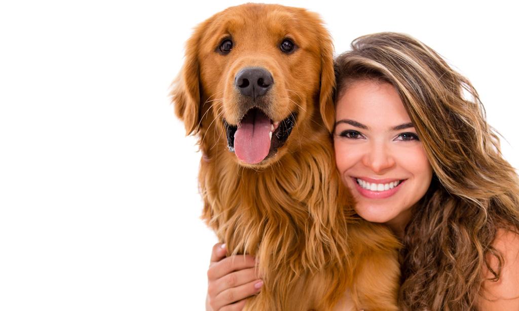 Millainen koiranomistaja sinä olet? Testaa itsesi - AVA - Tassuklubi