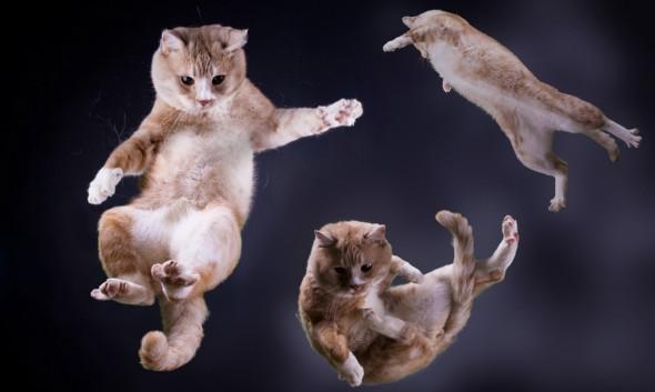 Kuvatulos haulle  kissat