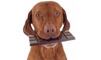Älä anna koiralle tai kissalle suklaata!