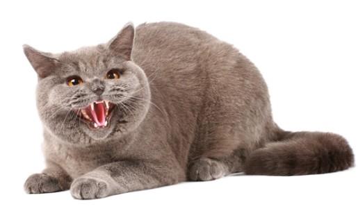 Kissa Kuolaa