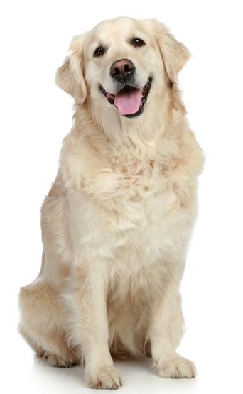 mikä koira minulle avoin pillu
